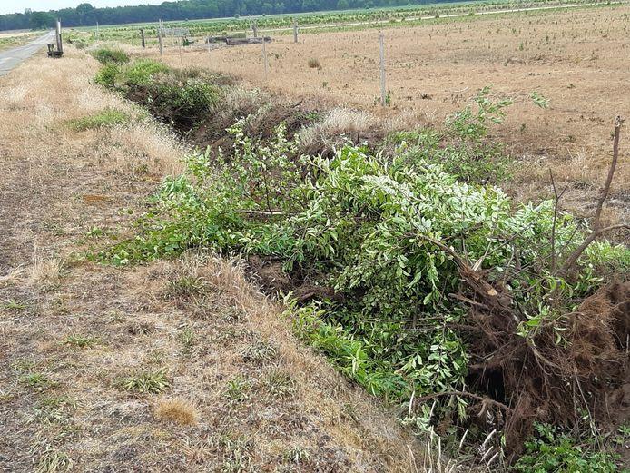 Zo liet de gemeente Landerd de houtwal achter die weg moest om de sloot te kunnen maaien.