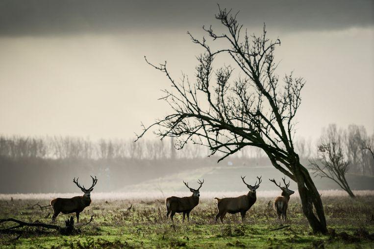 null Beeld Hollandse Hoogte / Olivier Midde