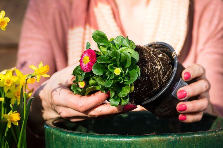 Wie zin heeft kan dit weekend al bloemetjes planten