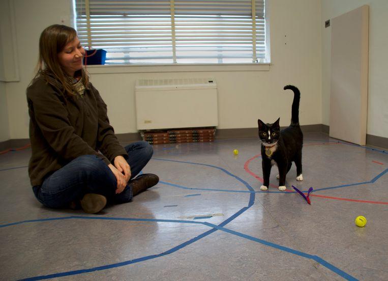 Het Amerikaanse experiment: in een vreemde omgeving voelt de kat zich op zijn gemak bij zijn baasje. Beeld Kristyn Vitale
