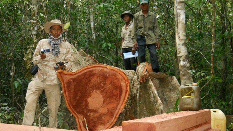 Activist Chut Wutty poseert naast een omgekapte boom. In Cambodja was hij een van de weinigen die nog actie durfde te voeren tegen grootschalige houtkap. In april dit jaar werd hij door de militaire politie doodgeschoten. Beeld ap