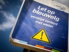 Blauwalg in Surfvijver Veenendaal