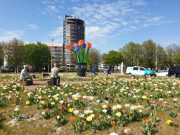Eén van de tulpenvelden van de Stichting DelftBloeit in de wijk  Poptahof.