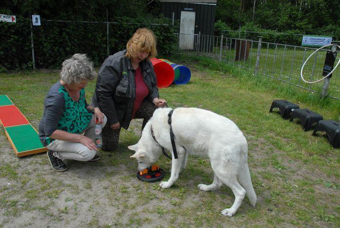 De 12-jarige Dingo, een Duitse herder in de kleur wit, gaf zich geheel over aan een 'denkspelletje', met een koekje als beloning. Baasje Regina Hoegee en bestuurslid Wilma Faas keken verwonderd toe.