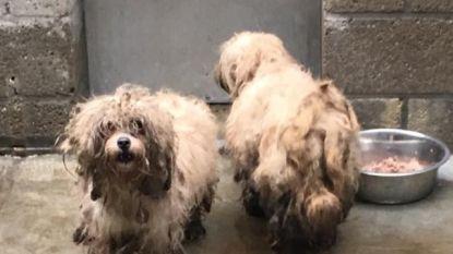 17 zwaar verwaarloosde honden in beslag genomen in Bonheiden