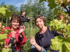 Voedselbos Zeewolde open voor publiek, de komende vijf jaar 150 hectare nieuw voedselbos erbij in Nederland