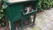Vakantiegangers laten poes met drie kittens uitdrogen in konijnenhok