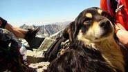 Bergbeklimmers redden achtergelaten hond van hoogste berg in Polen