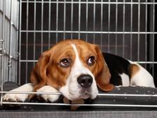 Scherpere regels voor dierenpension Laag Beugt in Heeswijk-Dinther
