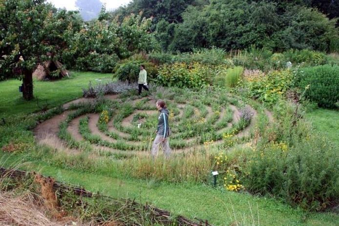 Ine van der Aa (vooraan) en Ingrid van Aalst belopen het labyrint. Links de ietwat uitgezakte abrikozenboom bij de 'entree'.foto Sander Grootendorst
