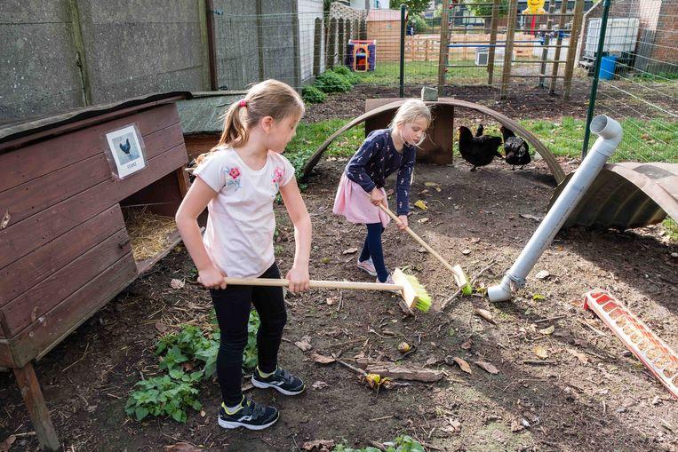 Meisjes hard aan het werk in het kippenhok van de basisschool.
