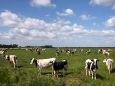 Flevoland is de landelijke hotspot voor biologische landbouw