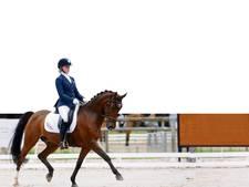 Top paardensport naar Den Goubergh in Roosendaal tijdens EK