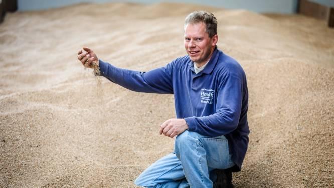 """Bakker Hendrik teelt nu ook zelf graan: """"Nu kan ik écht zeggen dat het mijn eigen brood is"""""""