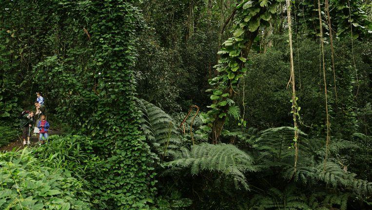 In tegenstelling tot wat Andries Temme verwachtte, is de invloed van het broeikasgas voor alle plantensoorten gelijk. Beeld thinkstock
