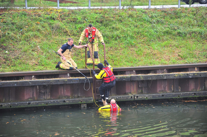 Ree in het water in Someren
