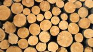 """""""België niet klaar om illegale houthandel te stoppen"""""""