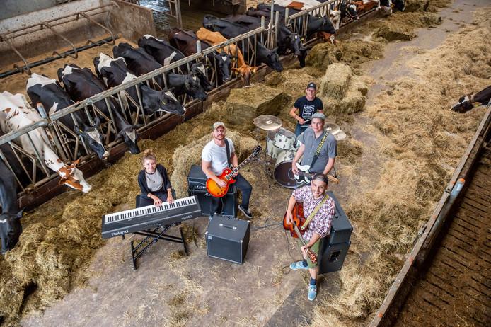 De band Omloop oefent in de koeienstal van melkveehouder Niesing.