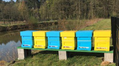 300.000 bijen leveren weldra Hidrodoe-honing