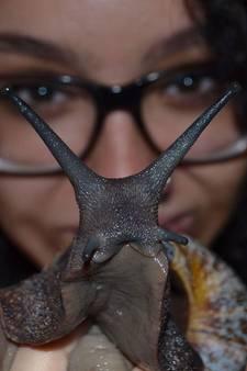 Slapen tussen de terraria: Luana en haar reuzenslakken