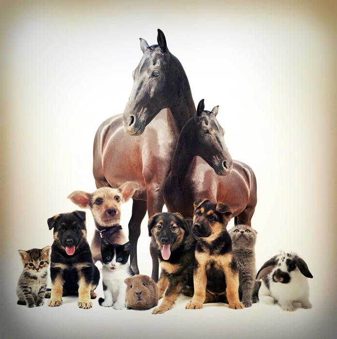 Vooral paarden zijn de boosdoeners.