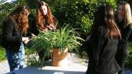Leerlingen GO! Atheneum bouwen eigen terrarium