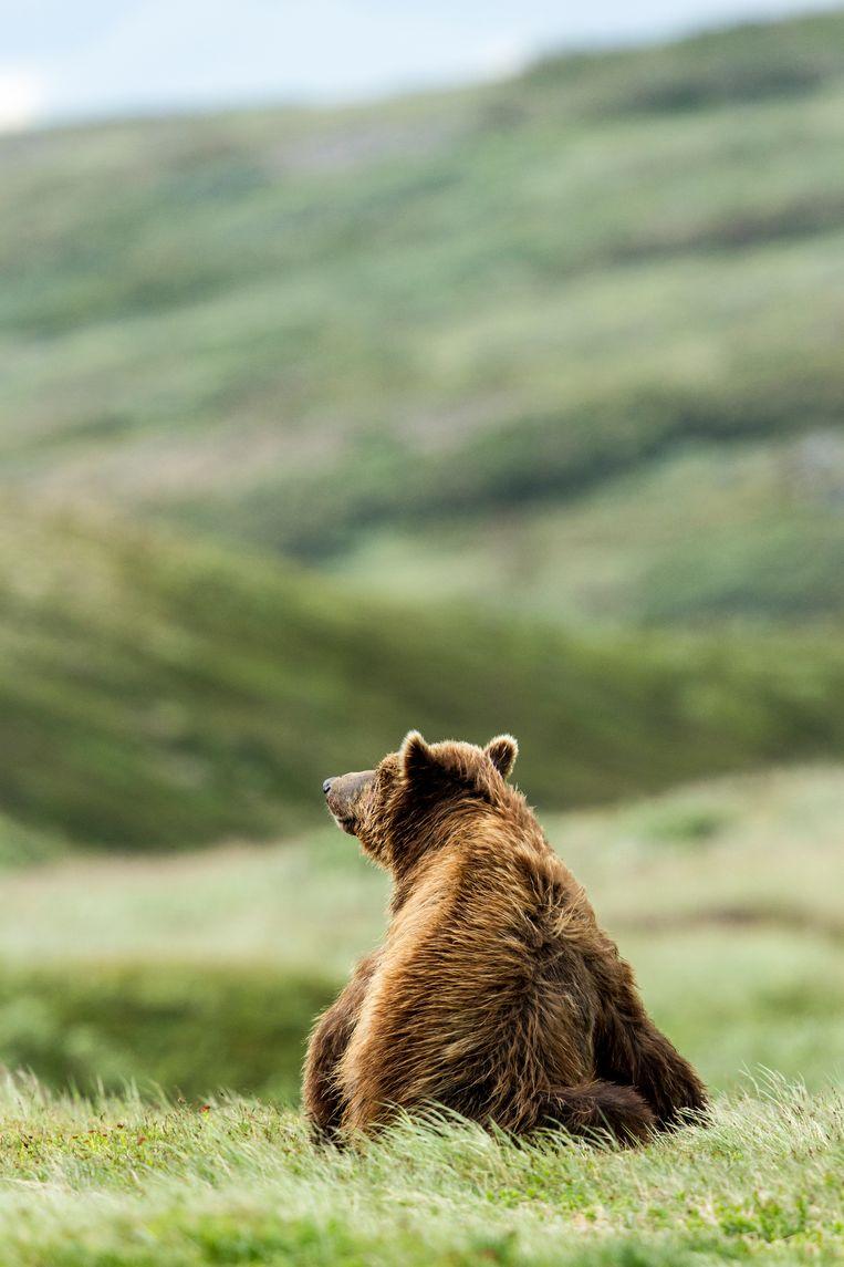 De 12-jarige dochter in dit boek krijgt gezelschap van een goedmoedige beer.  Beeld Getty Images/Aurora Open