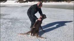 VIDEO: Net Bambi: Finse kustwacht redt schattig hertje van ijs
