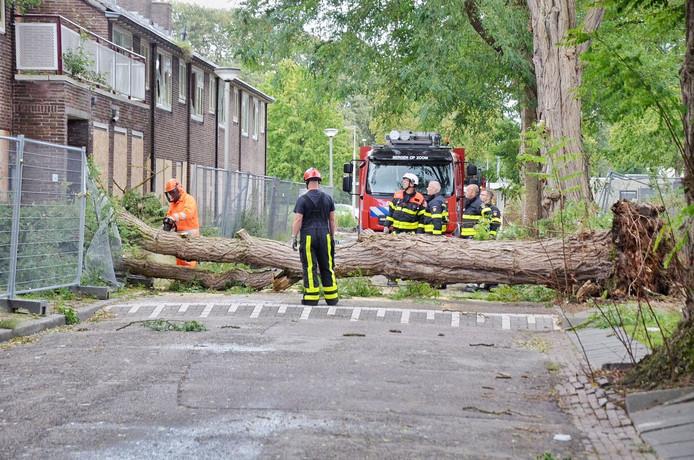 Boom tegen huis in Bergen op Zoom