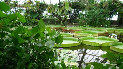 Plantentuin start met digitalisering 1,5 miljoen herbariumspecimens
