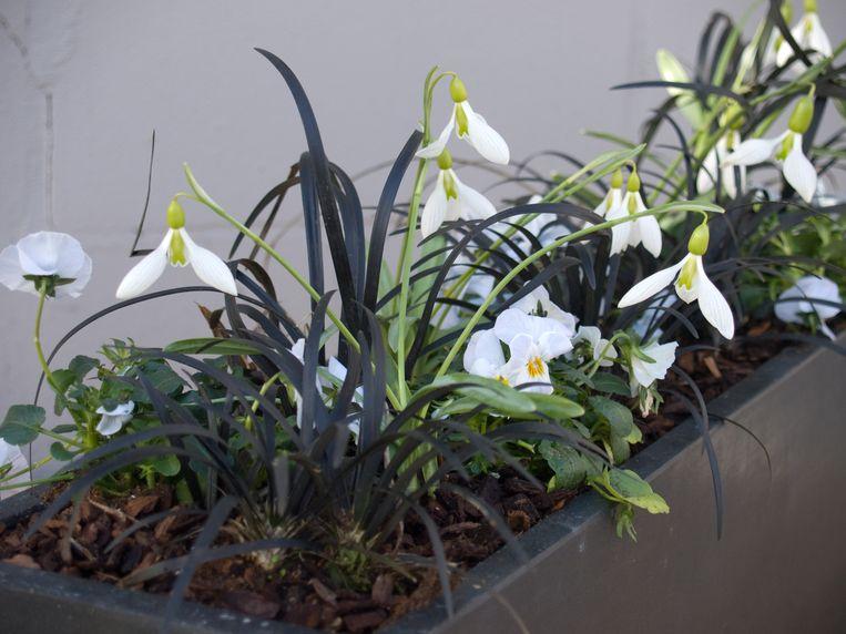 De gemeente wil inwoners stimuleren om wat meer bloemen in het straatbeeld aan te brengen.