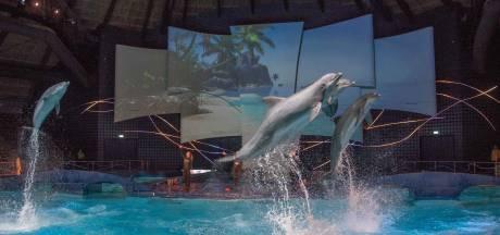 Dolfinarium in Harderwijk trekt educatieve lijn door: ook zeeleeuwenshow wordt vernieuwd