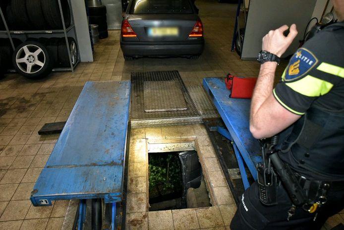 De planten werden gevonden in een ondergrondse ruimte.
