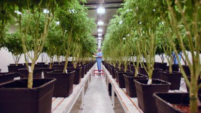 Cannabisplantage met 1.425 planten ontdekt