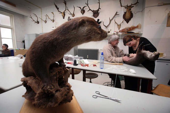 Het Natuurmuseum Nijmegen verhuist vanaf begin oktober naar De Bastei aan de Waalkade.