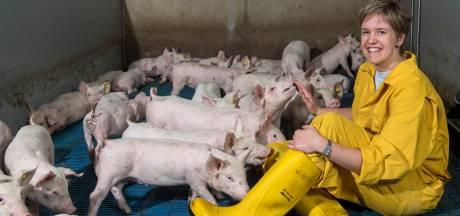 'Meer geld voor terugbrengen veestapel is mooi, maar de varkensboer verdient ook waardering'
