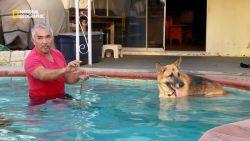 Zo helpt hondenfluisteraar deze Duitse herder af van extreme angsten