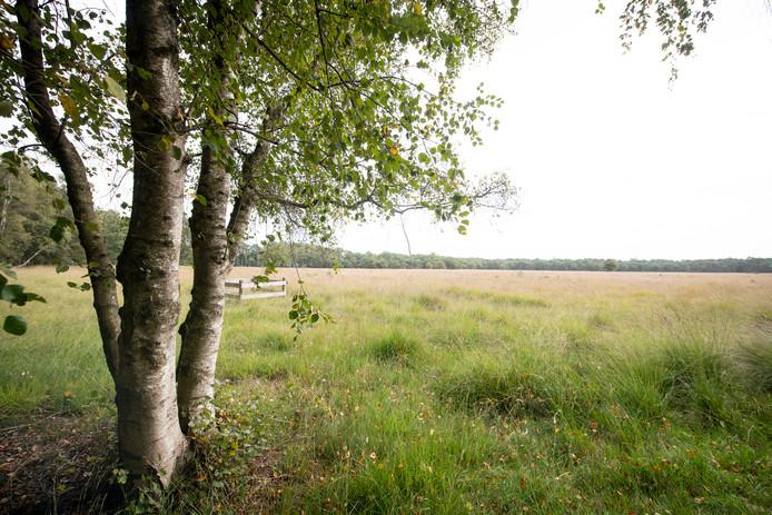 Het natuurgebied Boetelerveld van Landschap Overijssel tussen Haarle en Raalte.
