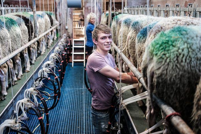 Ewoud Verink met zijn schapen.