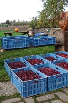 Makers streekproducten in regio 'Veluwe IJsselvallei'  bundelen hun krachten