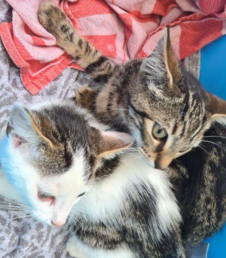 Scholieren vinden kittens langs de weg in Renswoude