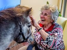 Knuffelen met pony Angel in zorgcentrum: 'Een mooi lief paardje met leuke schoentjes aan'