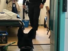 Deze hond ruikt elk mobieltje dat meegesmokkeld wordt in de gevangenis