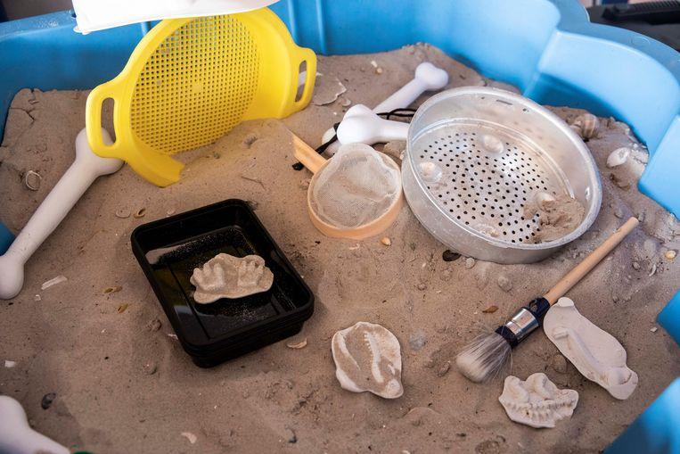 Een zandbak met fossielen.