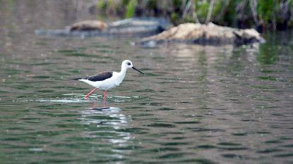 130 vogelsoorten gespot op Dijlelandse 'Big Day'