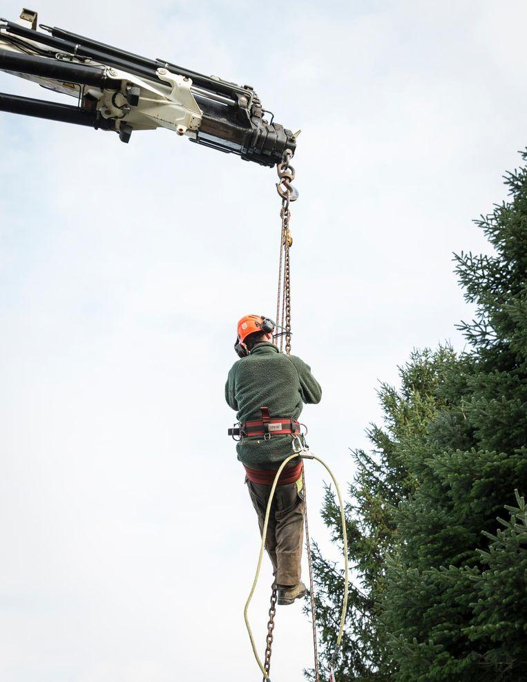 Als de boom eenmaal gearriveerd is op de Dam, werkt Van Zurk de hele nacht door om hem te perfectioneren Beeld Dingena Mol