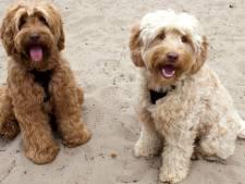 Met twaalf honden emigreren naar Spanje