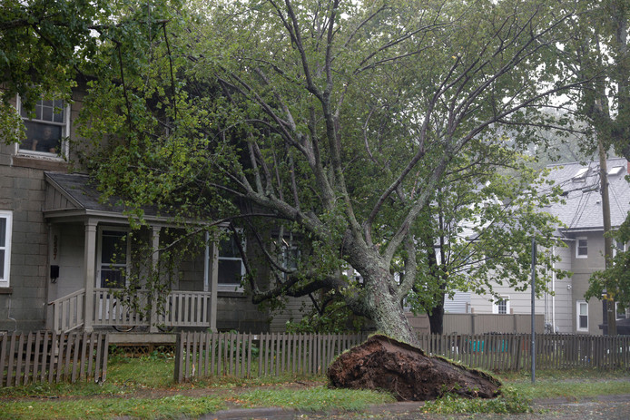 De hevige wind blies een boom omver die op een huis in Halifax viel.