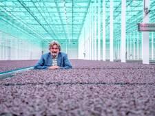 Glastuinbouw luidt noodklok over exorbitante verhoging elektriciteitstarieven: 'Een blamage'