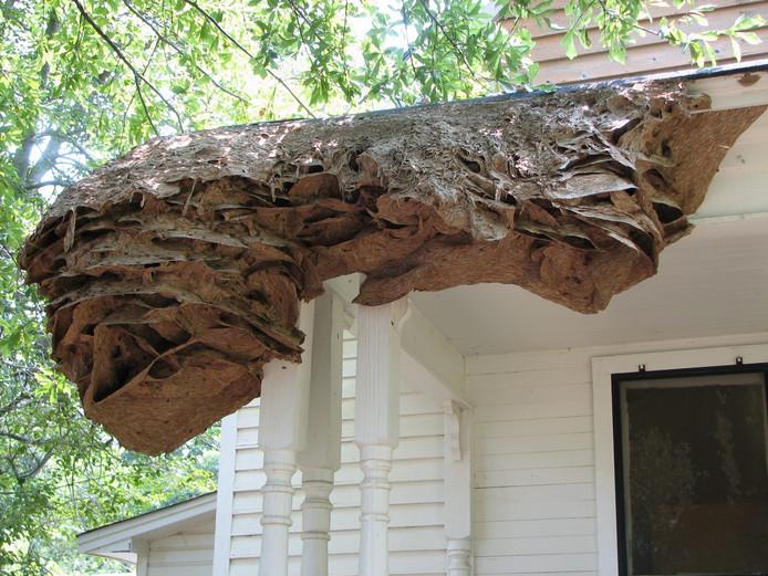 """Un """"super nid"""" sur la façade d'une maison."""